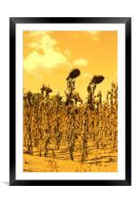 Cruel Summer, Framed Mounted Print