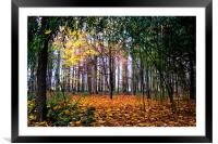 Colours of Autumn, Framed Mounted Print