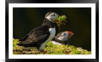 Nesting Time, Framed Mounted Print