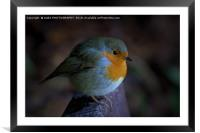 The Robin Red Breast, Framed Mounted Print