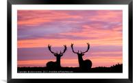 stags at sunset, Framed Mounted Print