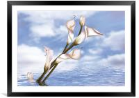 Callas In Water, Framed Mounted Print
