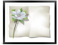 Magnolia on Sheet, Framed Mounted Print
