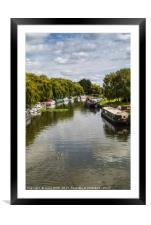 Trio of ducks on the River Great Ouse, Framed Mounted Print