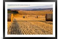 Straw Bales at Dawn, Framed Mounted Print