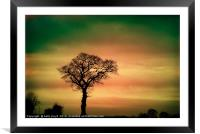 Tree Silhouette against the sky, Framed Mounted Print