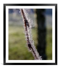 Frosted, Framed Mounted Print