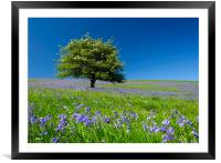 Springtime Blue, Framed Mounted Print