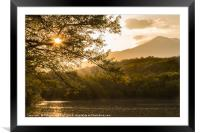 Sunset through the trees over the lake-, Framed Mounted Print