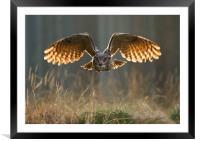 Eagle Owl , Framed Mounted Print