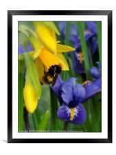 """""""Spring Visitor"""", Framed Mounted Print"""