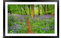 """""""Evening light in the bluebell wood 3"""", Framed Mounted Print"""