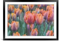 """""""Artistic Tulips"""", Framed Mounted Print"""