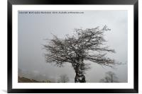 Iced tree on a misty day,, Framed Mounted Print