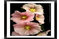 Beautiful Spring flower,, Framed Mounted Print