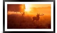 Deer stags  , Framed Mounted Print
