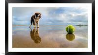 Dog v Ball, Framed Mounted Print