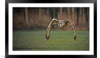 European Eagle Owl in Flight, Framed Mounted Print