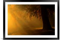 gloden light rays over Tree Hampstead-heath london, Framed Mounted Print