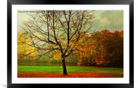 The Autumn Tree Hampstead  London , Framed Mounted Print
