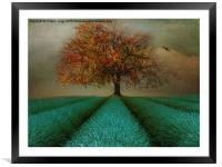 The Autumn tree , Framed Mounted Print