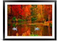 swan lake , Framed Mounted Print