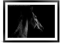 The Spanish Stallion, Framed Mounted Print