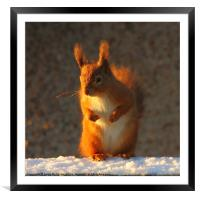 Bright Eyed And Bushy Tailed II, Framed Mounted Print