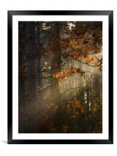 Leaf Ray, Framed Mounted Print