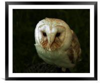 Barn Owl , Framed Mounted Print