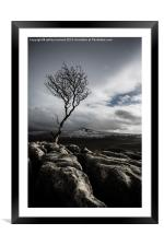 The Old Tree, Framed Mounted Print