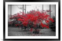 The red leaves, Framed Mounted Print