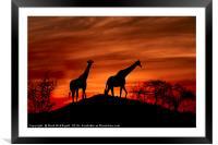 Giraffe Silhouette , Framed Mounted Print