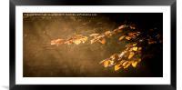 Illuminated Autumn Beech , Framed Mounted Print