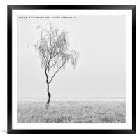 Misty Birch Tree, Framed Mounted Print