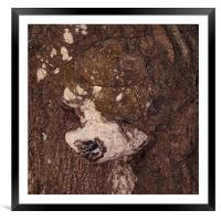 Caninus Treow, Framed Mounted Print