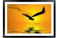 Eagle Sunset, Framed Mounted Print
