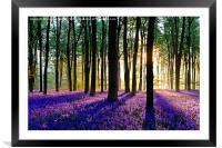 Bluebell Dawn - 5, Framed Mounted Print