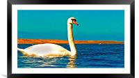 A beautiful swan on the lake , Framed Mounted Print