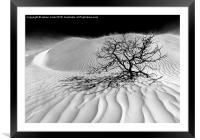 Sand Storm , Framed Mounted Print