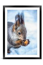 The squirrel with an acorn, Framed Mounted Print