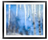 Icicles with drops in a birch grove, Framed Mounted Print