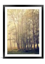 Trees, Framed Mounted Print