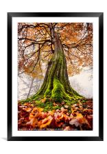 The Power of Roots, Framed Mounted Print