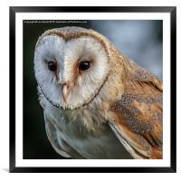 Barn Owl Portrait, Framed Mounted Print