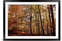 Autumnal Trees Edinburgh, Scotland, Framed Mounted Print