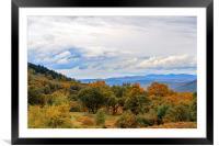 Autumn Woodland , Framed Mounted Print
