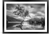 The Lone Tree, Llyn Padarn, Llanberis, Framed Mounted Print