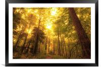 Autumn Sunlight, Framed Mounted Print