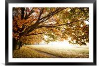 Autumn Fall in morning light, Framed Mounted Print